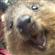 Zelacks's avatar