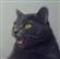 Zaydene's avatar