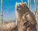 badBear11's avatar