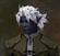Trufs's avatar