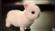 Bunny2086's avatar