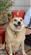 GuardianLemartes's avatar
