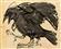 kyroptera's avatar