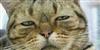 Brucegusmao's avatar