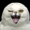 Wolfy23's avatar