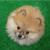 Liquirius's avatar