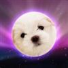 WhiteDoge's avatar