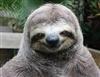slothman44's avatar