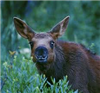 MooseAboose's avatar