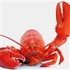 LobsterEmperor's avatar