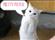 ronintje's avatar