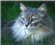SnowyCat's avatar