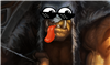 Radyr's avatar