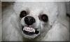 PoodleBark's avatar