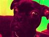 lecharcuteur's avatar