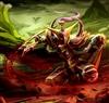 Komorebi3's avatar