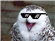 ErieTheOwl's avatar