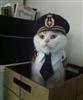 shippycat's avatar