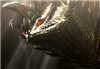 Dara_Amadyura's avatar