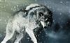 Wolfs's avatar
