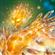 _MIREL's avatar