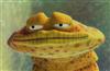 Maggot_Man's avatar