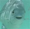 Runeraider's avatar