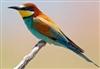 Savron's avatar